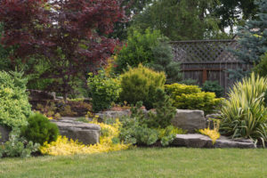 Naturally sculptured flat top rocks from northwest Oregon are placed in a beautifully landscaped backyard among a variety of perennial evergreens and shrubs.